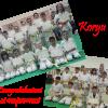Esami di Kyu - Corsi bambini e ragazzi